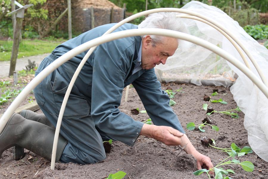 Piet plant kool